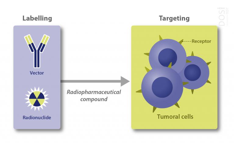 molecular radiotherapy scheme by Dositest